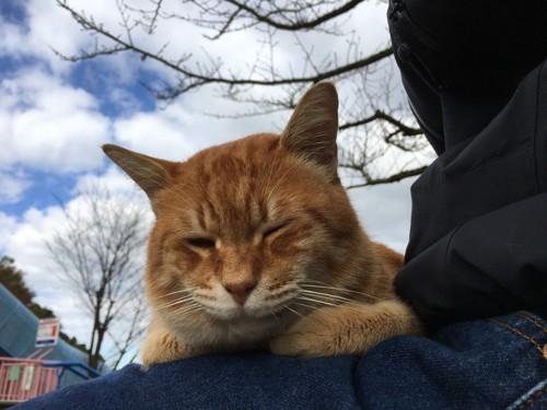 外で抱っこされる猫