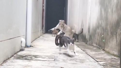 くぐり抜ける猫