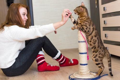 飼い主とリビングで遊ぶ猫