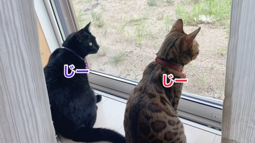 並んで外を見る2匹の猫
