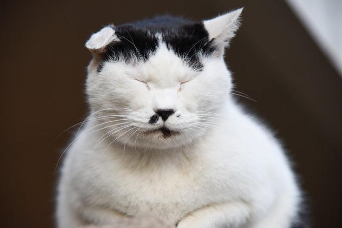 目をつむった白黒の猫