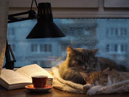 雨が降る窓辺で眠る2匹の猫
