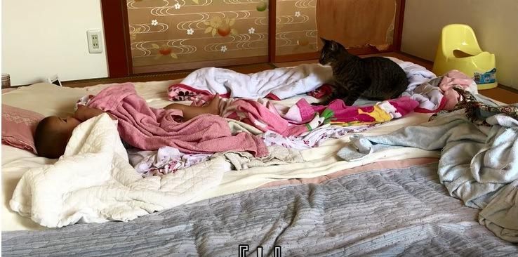 赤ちゃんとハッ!と立ち上がる猫