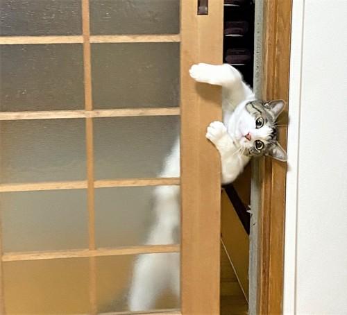 扉を開けようとする猫