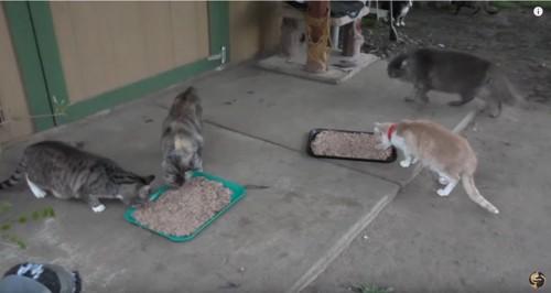 外で食事中の複数の猫
