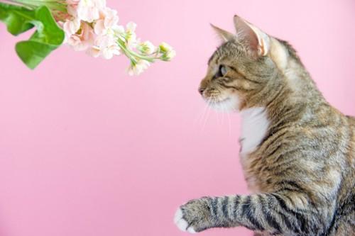 花を前に前足が上がっている猫