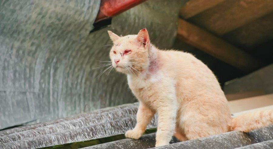 病気を抱える野良猫