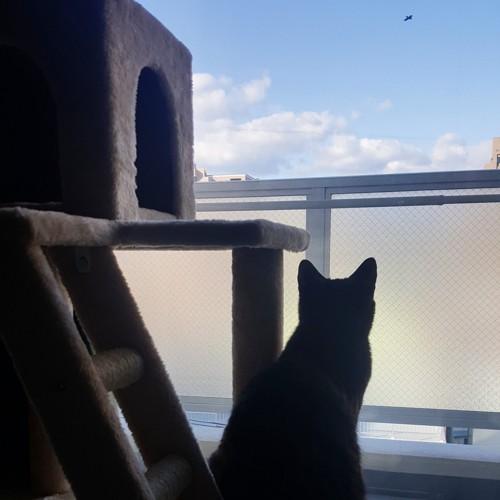 キャットタワーから空を見る猫