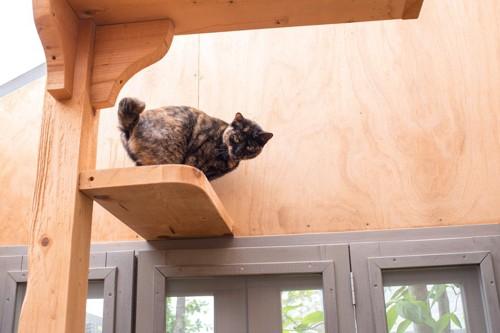 タワーの上にいる猫