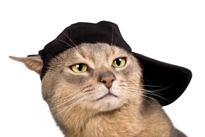 キャップをかぶった猫