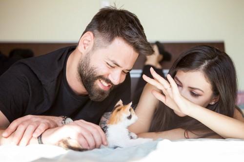 子猫を可愛がる人間のカップル