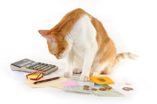 電卓や小銭と猫