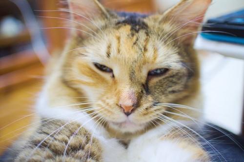 目を細めリラックスしている猫