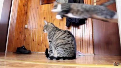 猫の上もジャンプ