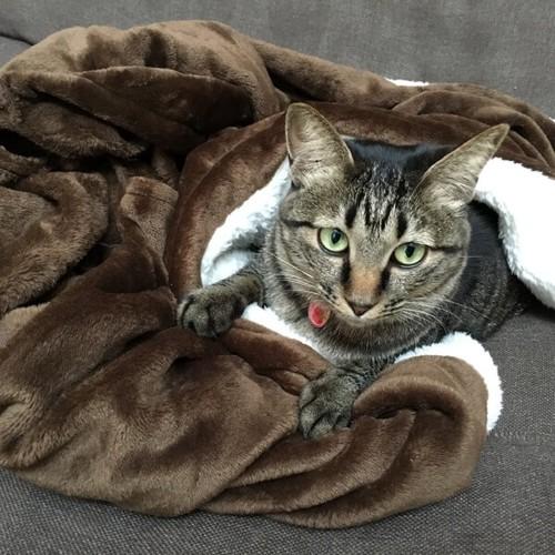 猫のあるある行動:毛布の一部に