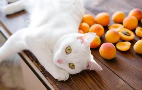 テーブルの猫と杏
