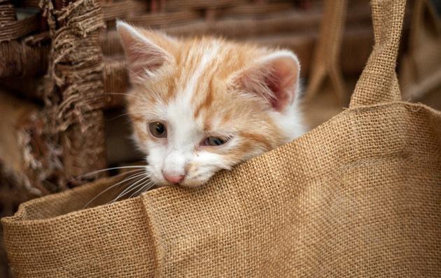 袋を噛んでいる猫