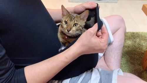 服のハンモックの中にいる子猫