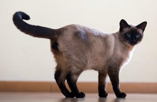 しっぽをあげてこちらを振り向く猫