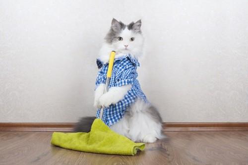 立ち上がって掃除をする猫