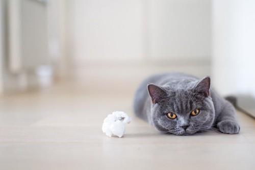 おもちゃの前で寝転がる猫