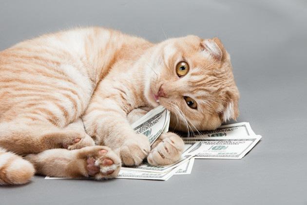 紙幣の上に寝転ぶ猫
