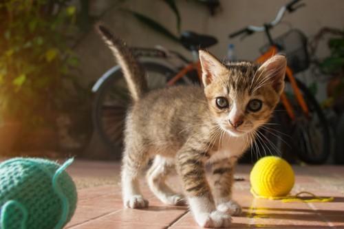 毛糸玉と猫