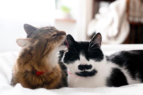 毛づくろいをする2引きの猫