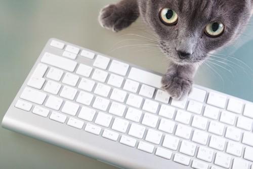 パソコンのキーボードに手を置く猫