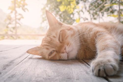 薄眼を開ける猫