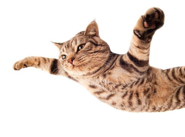 ダイブする猫