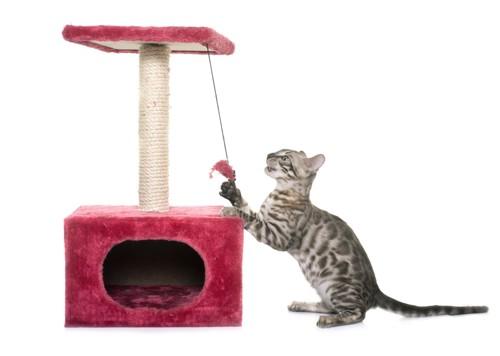 キャットタワーとベンガル猫