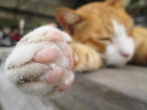 眠る猫の足の写真