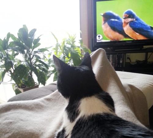 膝の上で外とテレビの鳥を見るチップくん