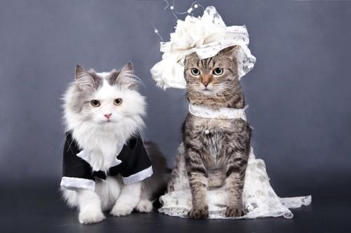 新郎新婦の格好をした2匹の猫