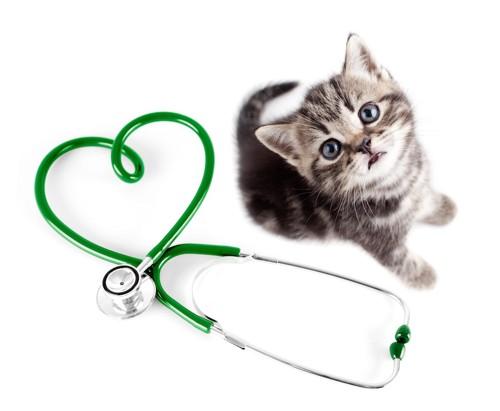 聴診器と子猫