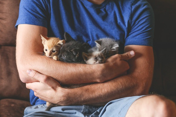 男性に抱かれる子猫3匹