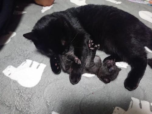 黒猫大、小2