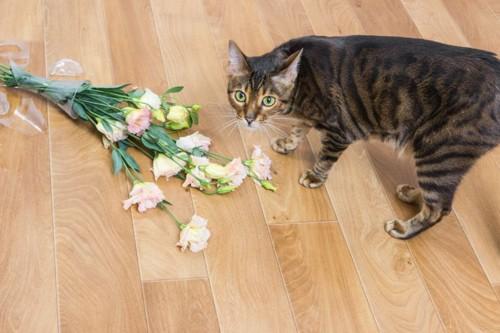 キジトラ猫と床の上の花