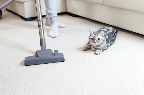 掃除機をかける人のそばにいる猫