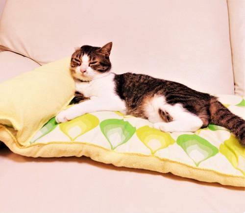 愛猫ベッドに満足