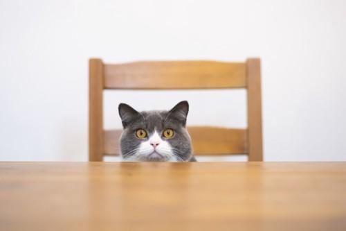 机越しにじっと見つめる猫