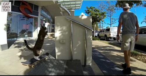 壁に飛び乗る猫