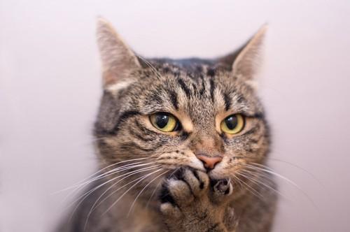 口元に手を当てている猫
