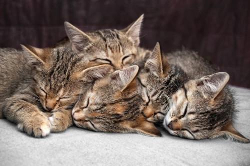 寝ている猫の群れ