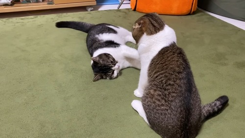横になる猫と座る猫の後ろ姿