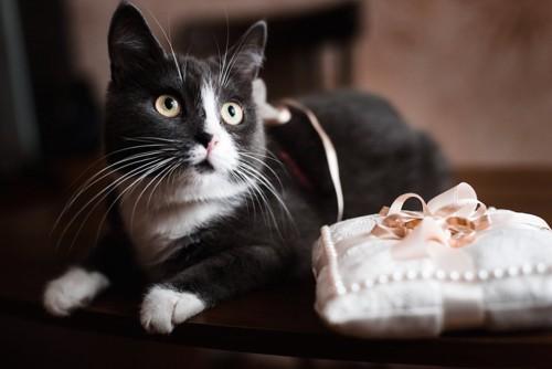リングの置かれたクッションの側で座る猫