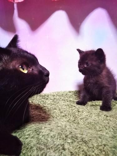 向かい合う黒猫と子猫