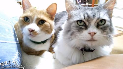 並んでいる2匹の猫