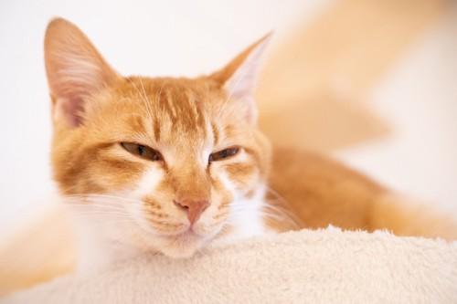 キャットタワーの上で目を細める猫
